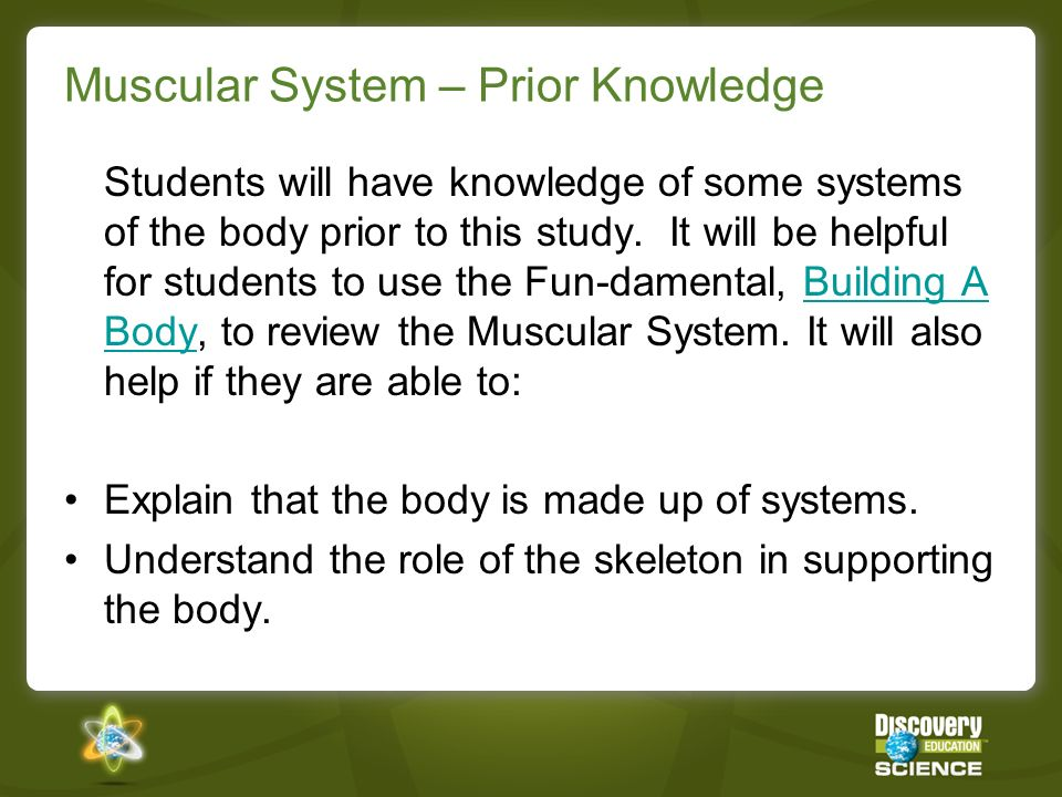 Muscular System – Prior Knowledge