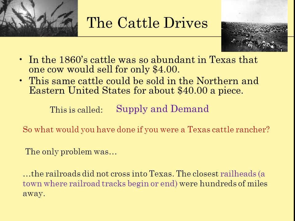 The Cattle Drives In the 1860's cattle was so abundant in Texas that one cow would sell for only $4.00.