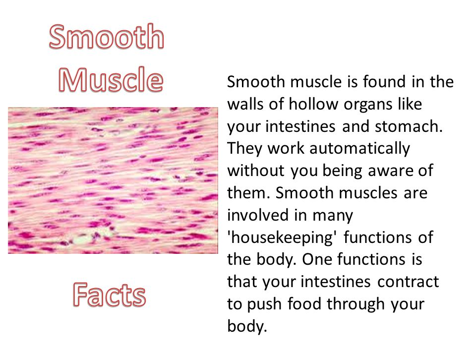 smooth muscle facts – citybeauty, Muscles