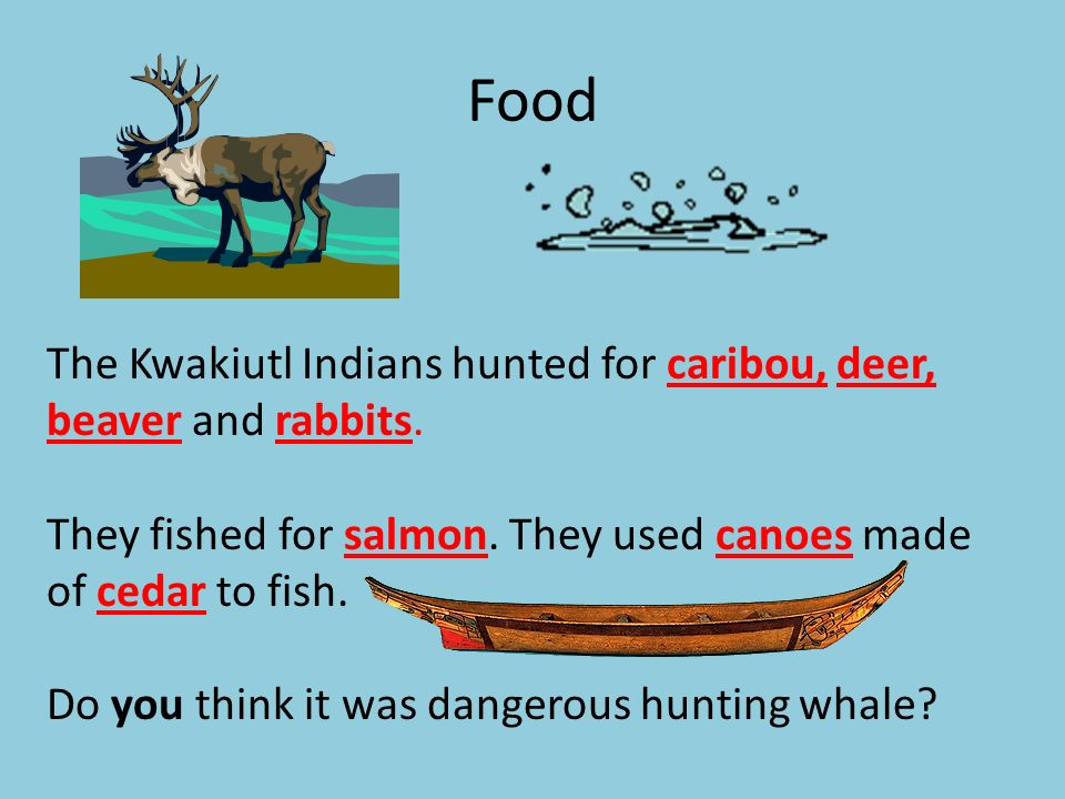 Food The Kwakiutl Indians hunted for caribou, deer, beaver and rabbits. They fished for salmon. They used canoes made of cedar to fish.