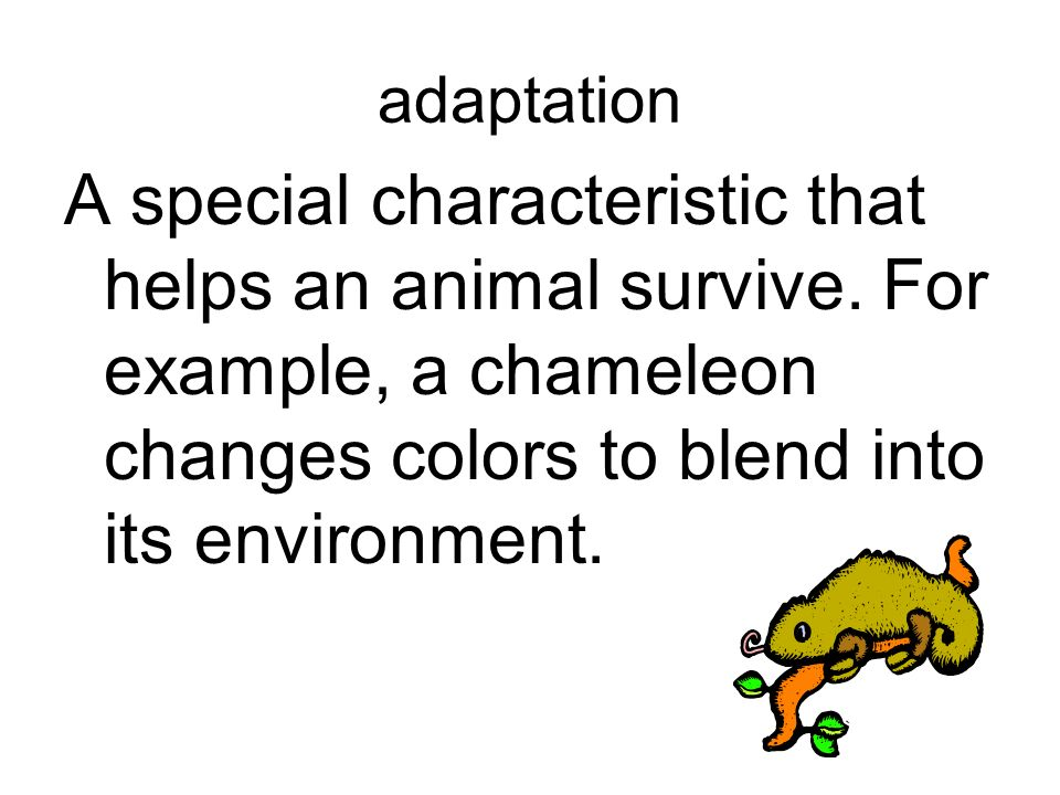 adaptation A special characteristic that helps an animal survive.