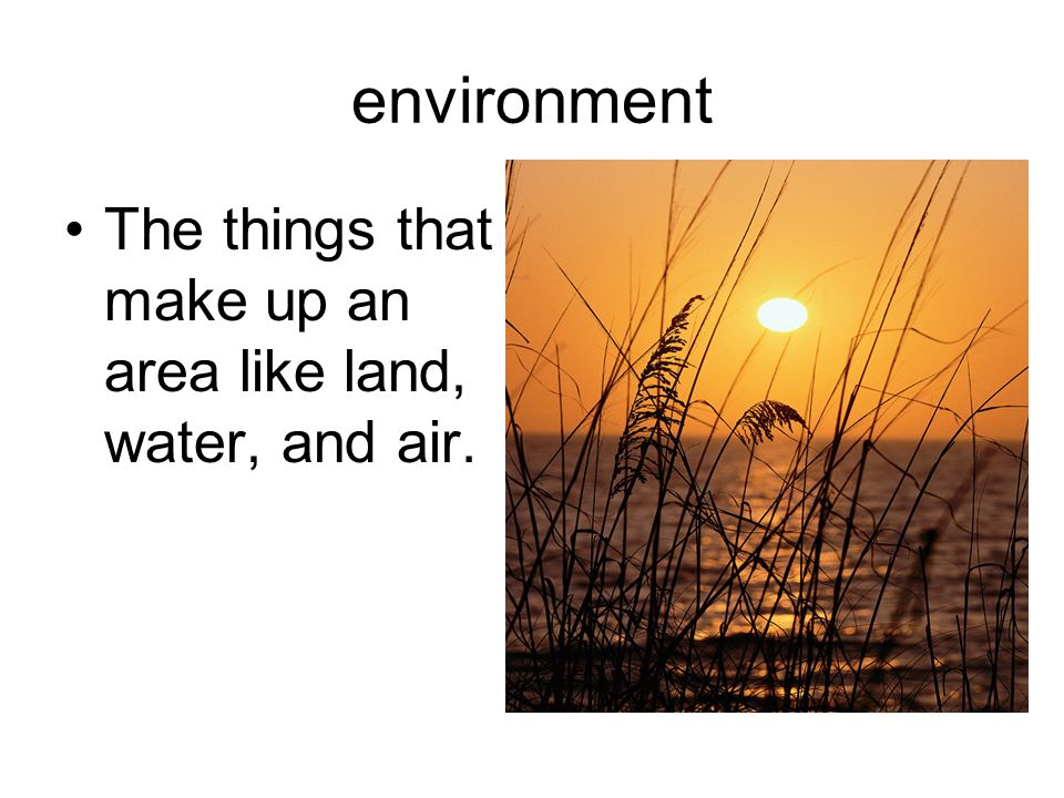 environment The things that make up an area like land, water, and air.