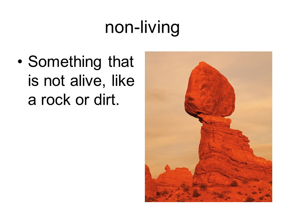 non-living Something that is not alive, like a rock or dirt.
