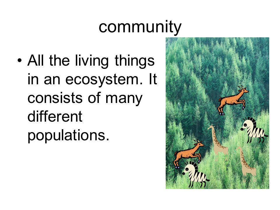 community All the living things in an ecosystem. It consists of many different populations.