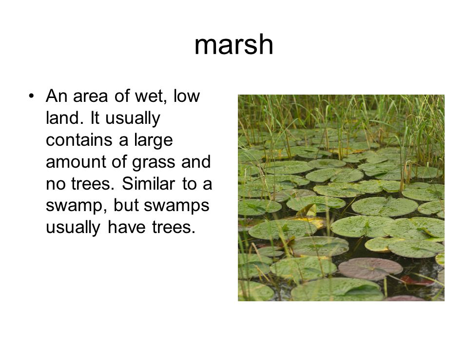 marsh An area of wet, low land. It usually contains a large amount of grass and no trees.