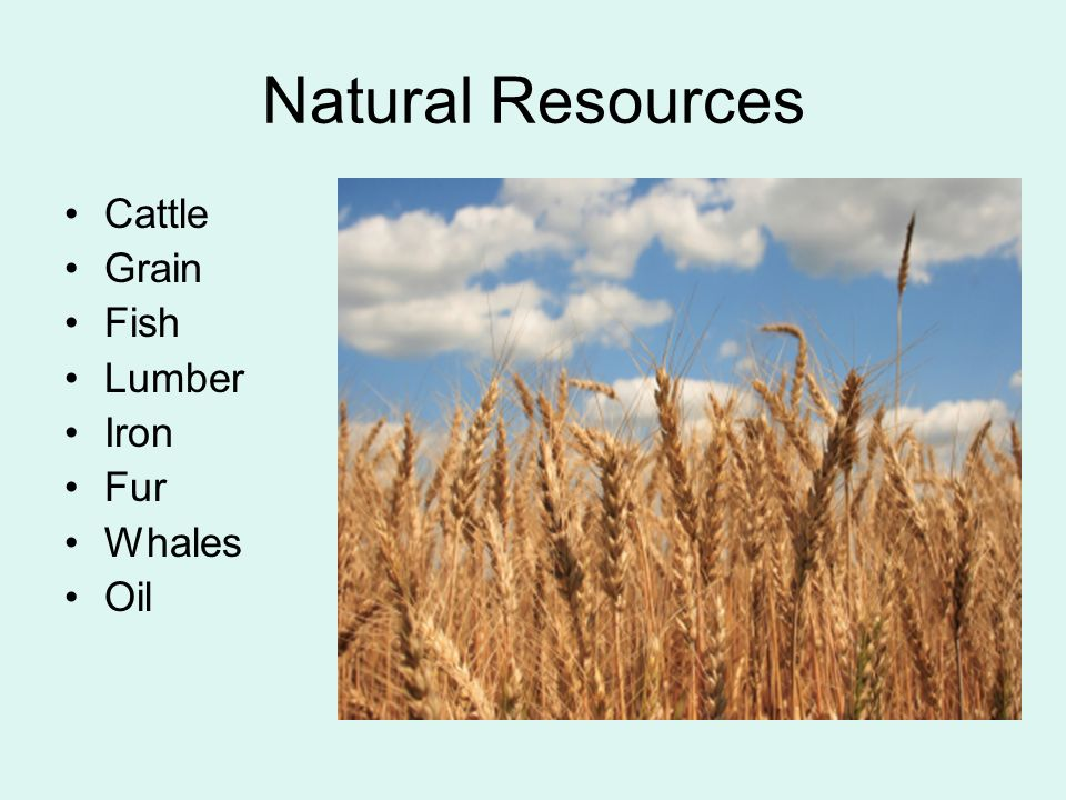 Natural Resources Cattle Grain Fish Lumber Iron Fur Whales Oil