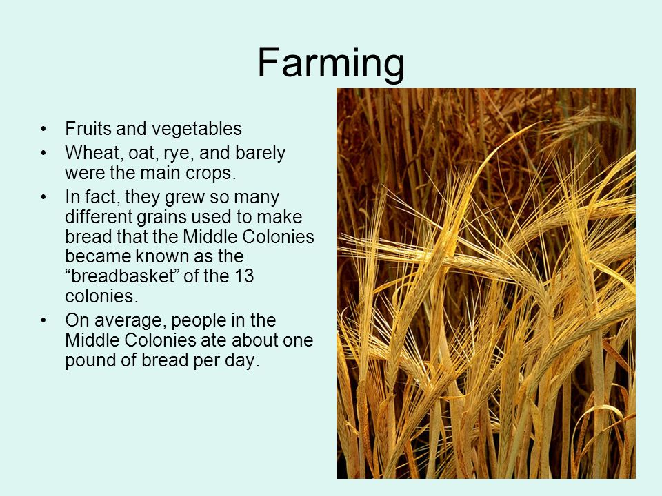 Farming Fruits and vegetables