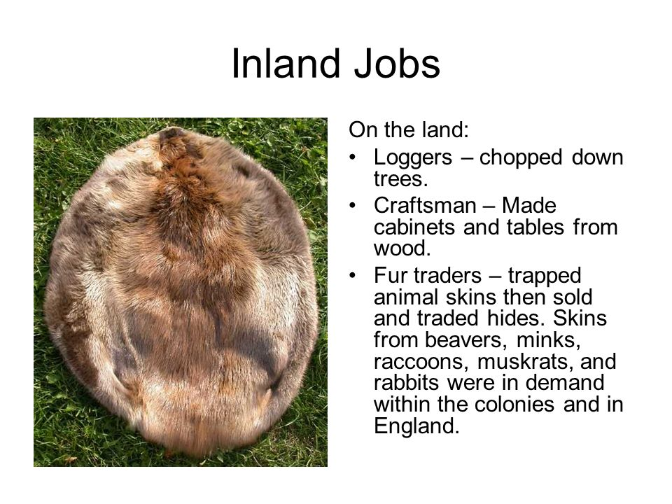 Inland Jobs On the land: Loggers – chopped down trees.