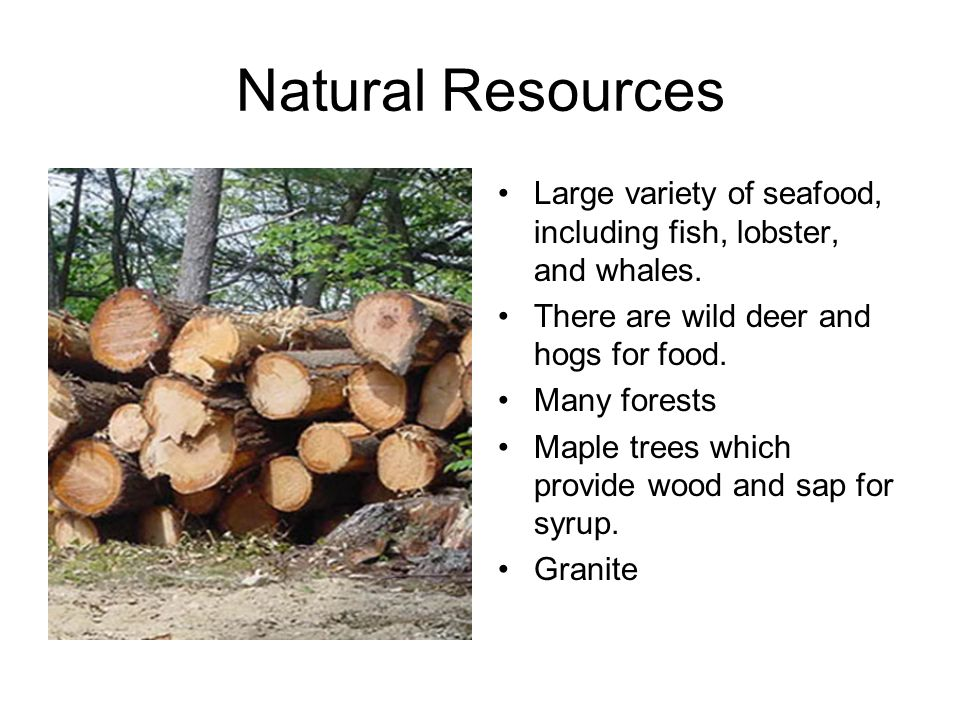 Natural Resources Large variety of seafood, including fish, lobster, and whales. There are wild deer and hogs for food.