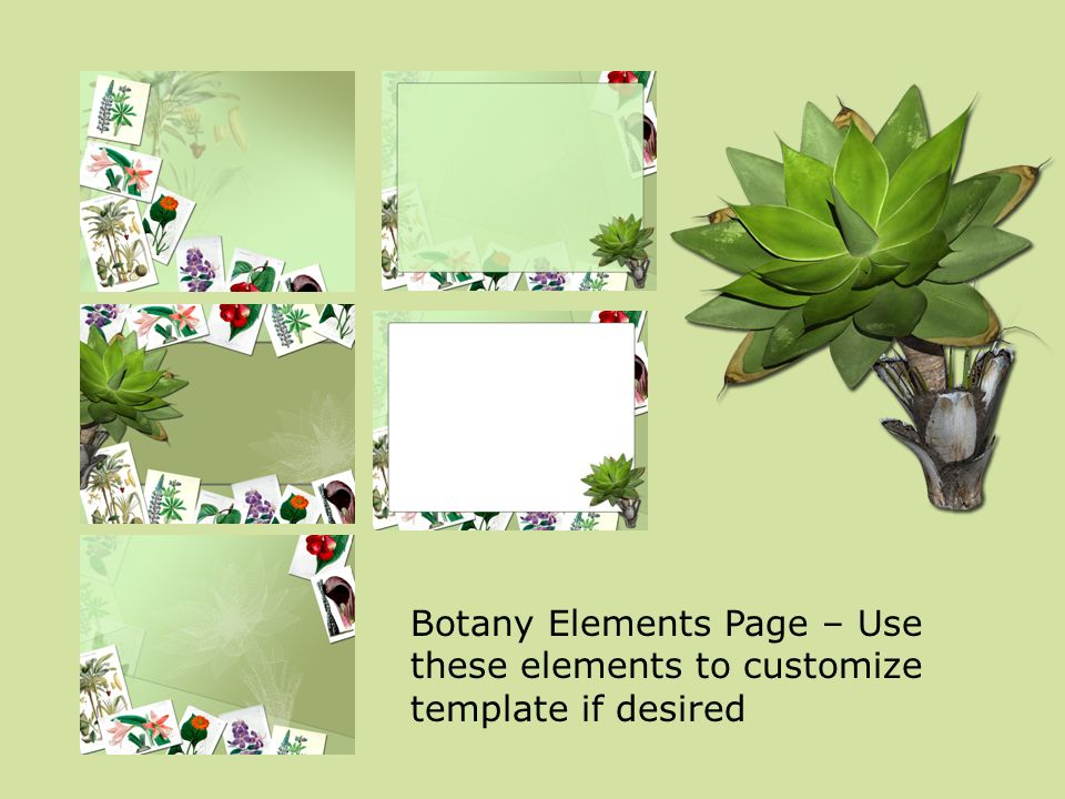 Botany Elements Page – Use these elements to customize template if desired