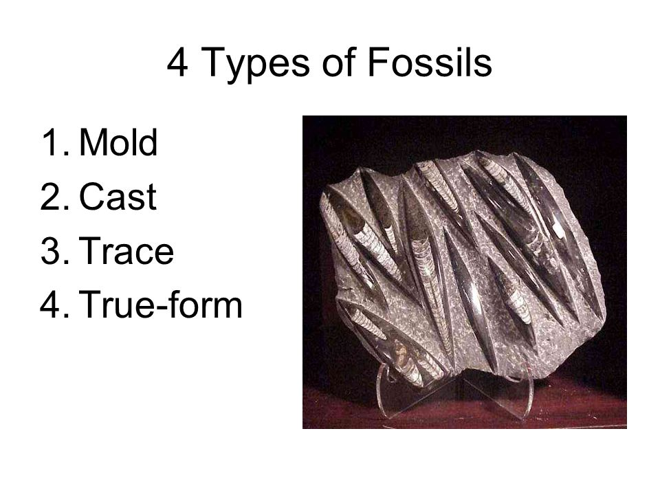 4 Types of Fossils Mold Cast Trace True-form