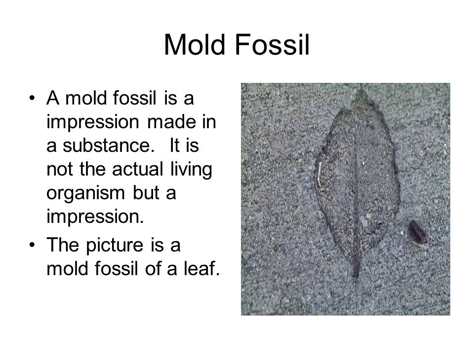 Mold Fossil A mold fossil is a impression made in a substance. It is not the actual living organism but a impression.