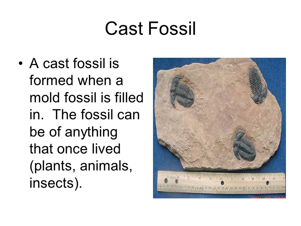Cast Fossil A cast fossil is formed when a mold fossil is filled in.