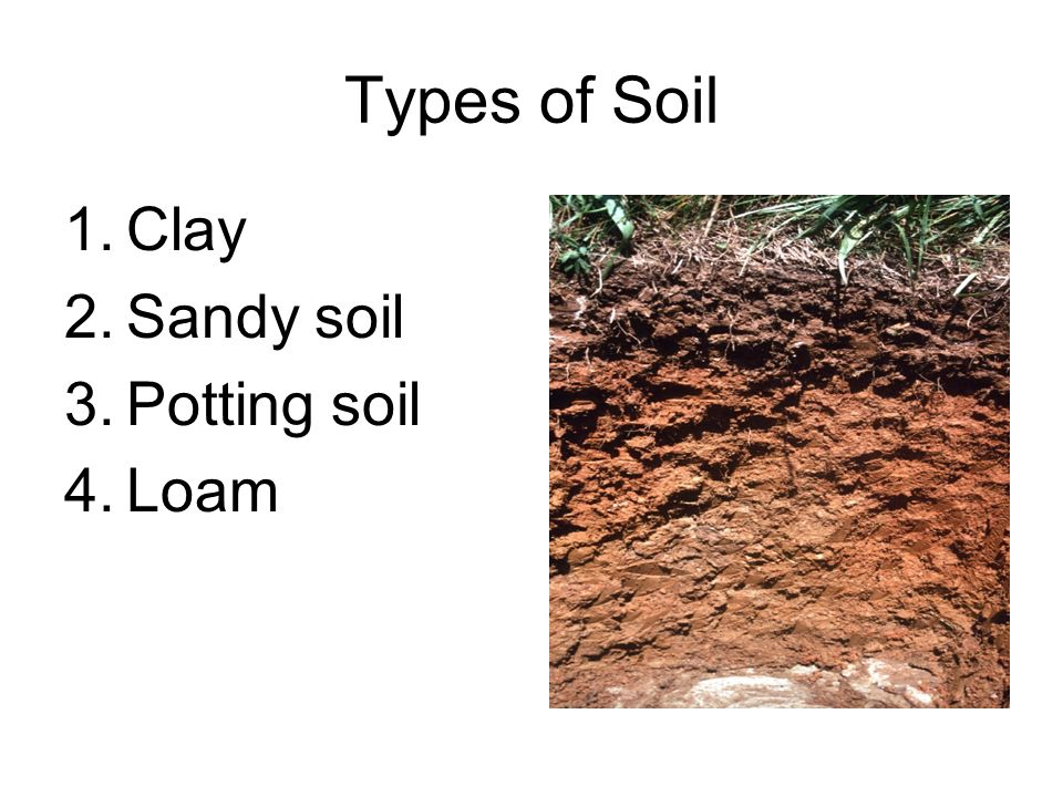 Types of Soil Clay Sandy soil Potting soil Loam