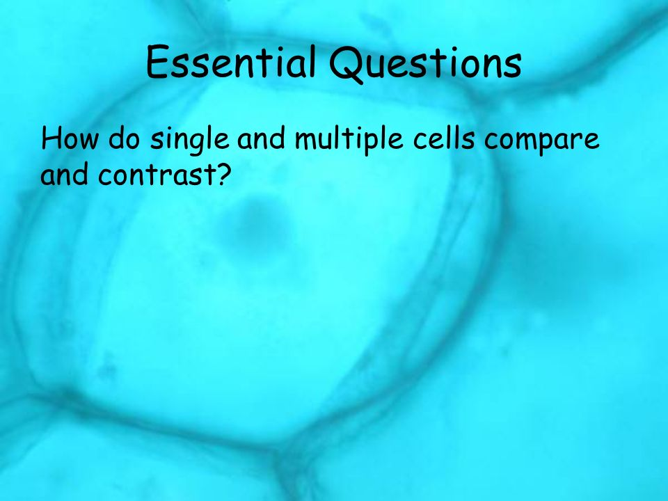 Essential Questions How do single and multiple cells compare and contrast