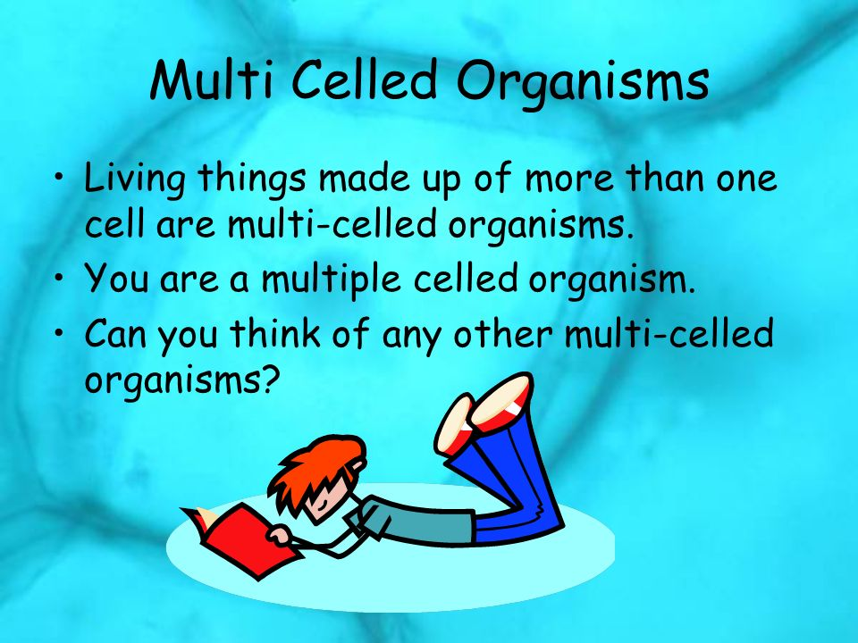 Multi Celled Organisms