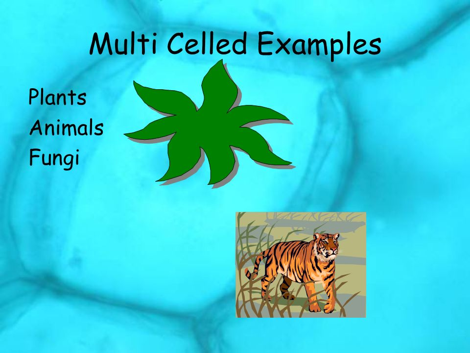 Multi Celled Examples Plants Animals Fungi