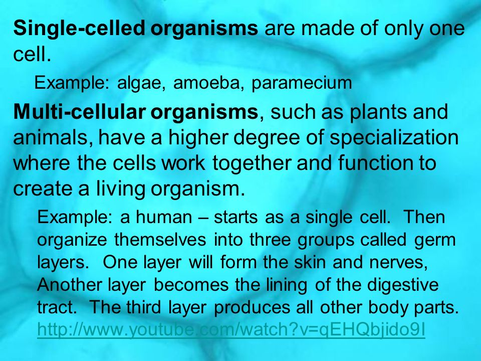 Single-celled organisms are made of only one cell.