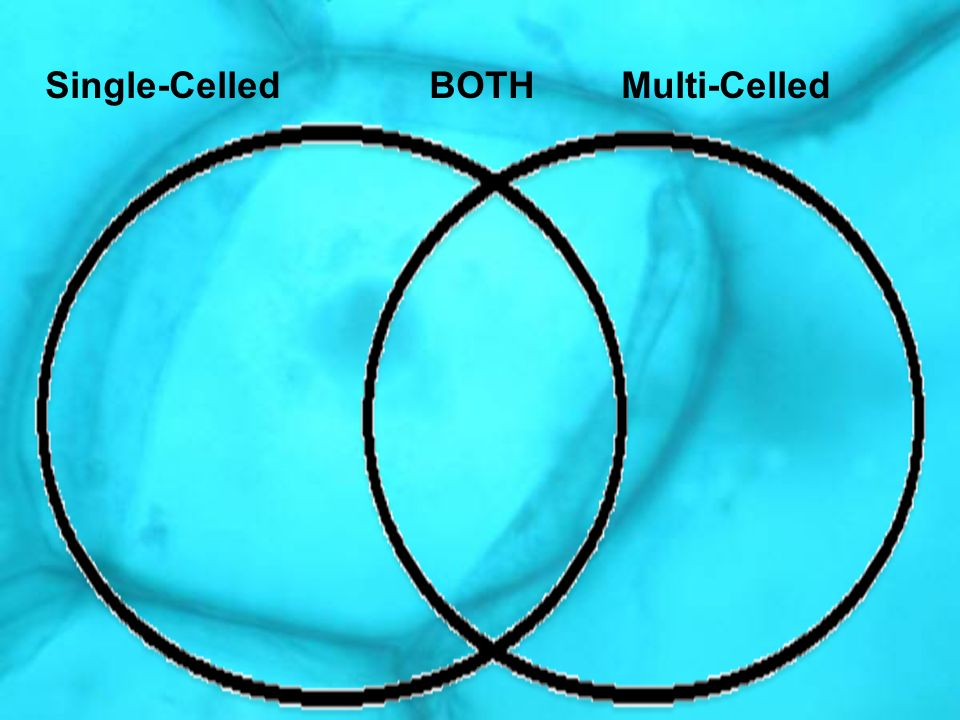 Single-Celled BOTH Multi-Celled