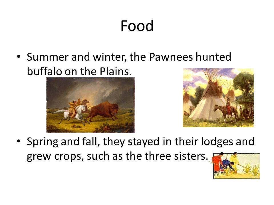 Food Summer and winter, the Pawnees hunted buffalo on the Plains.
