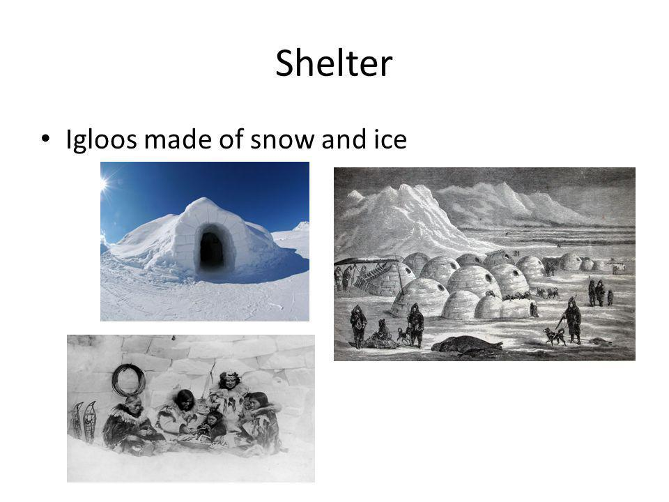 Shelter Igloos made of snow and ice