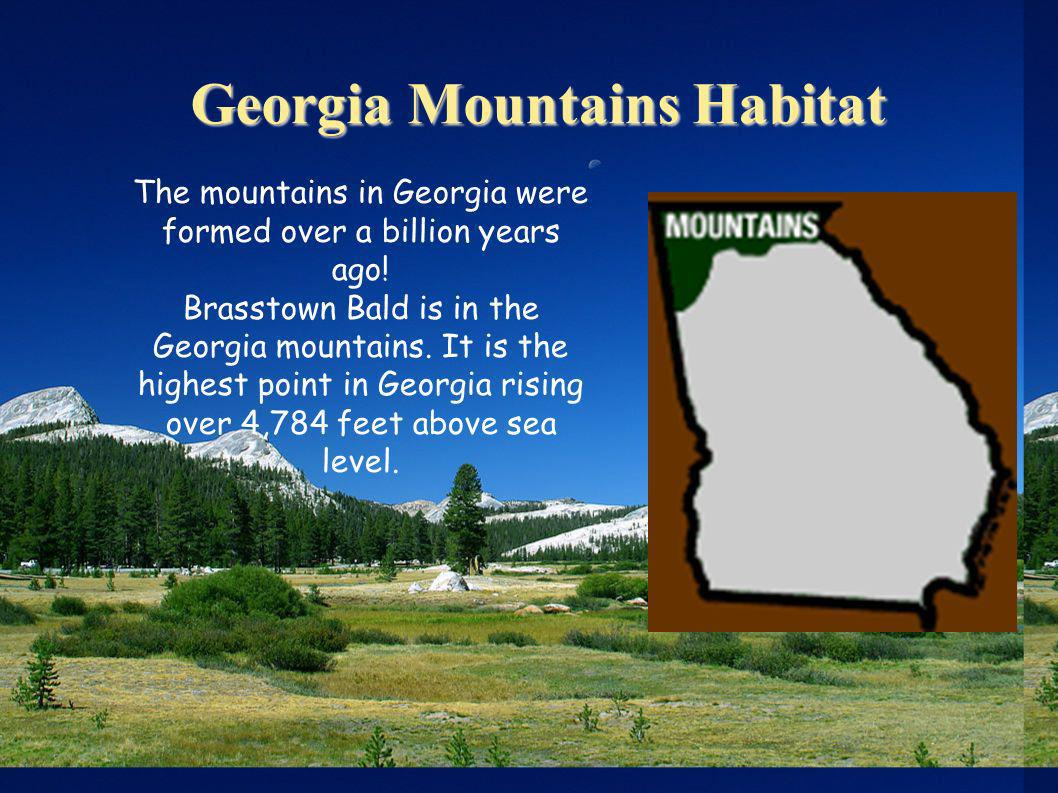 Georgia Mountains Habitat