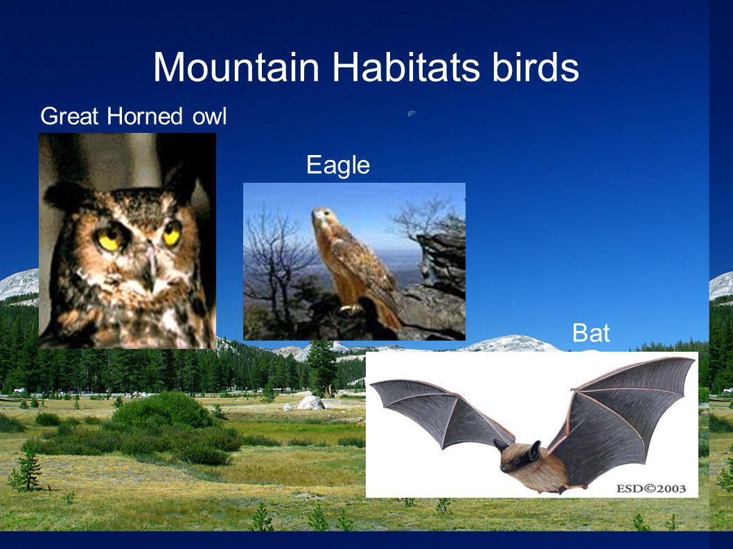 Mountain Habitats birds