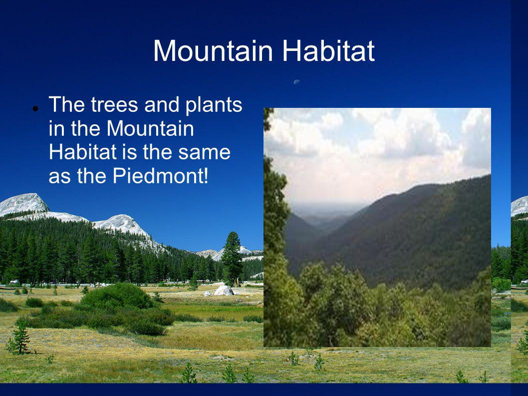 Mountain Habitat The trees and plants in the Mountain Habitat is the same as the Piedmont!