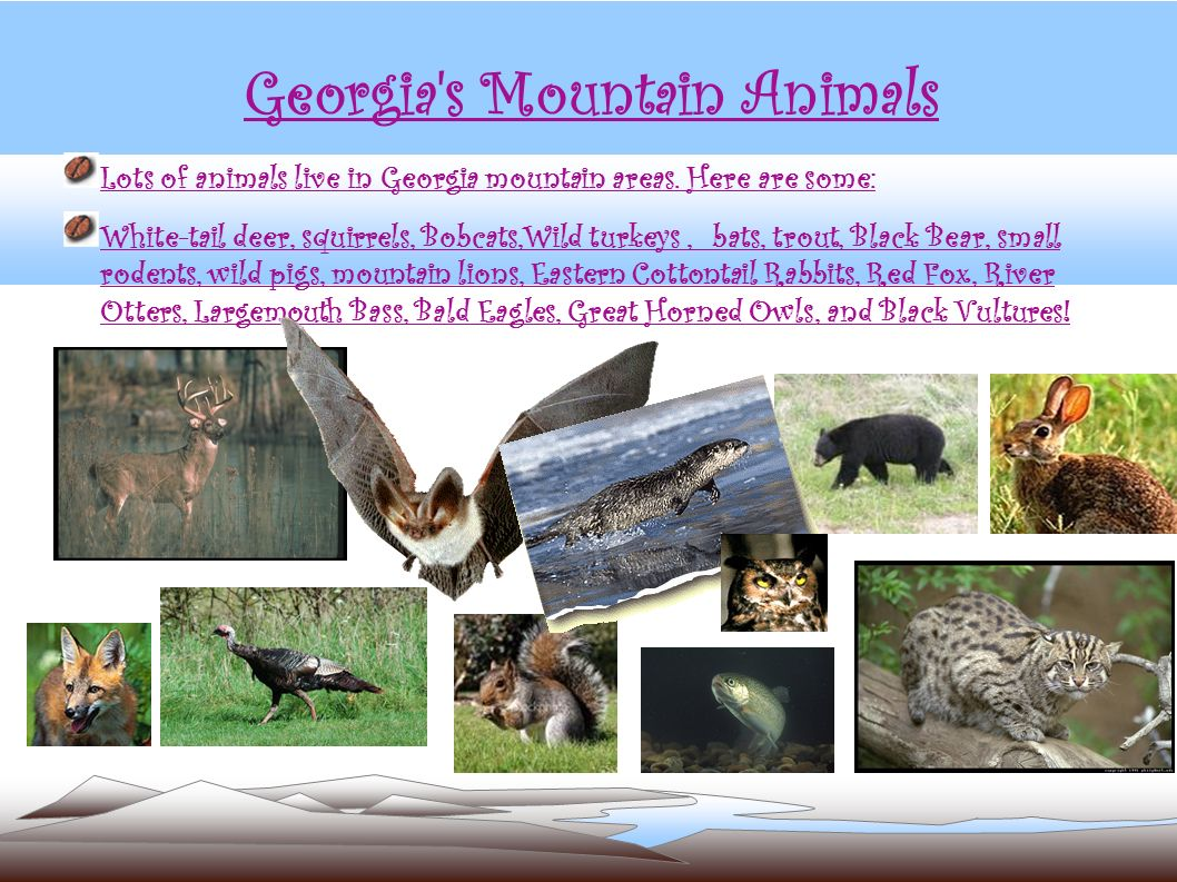 Georgia s Mountain Animals