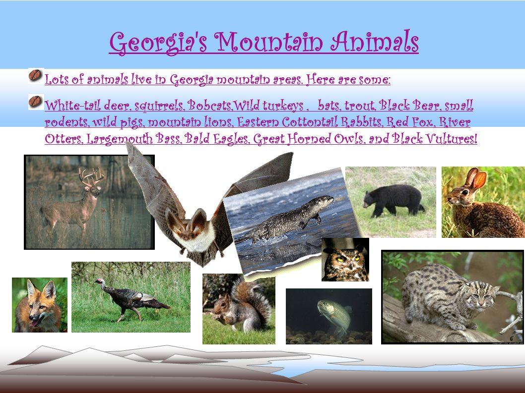 Georgia s Mountain Animals