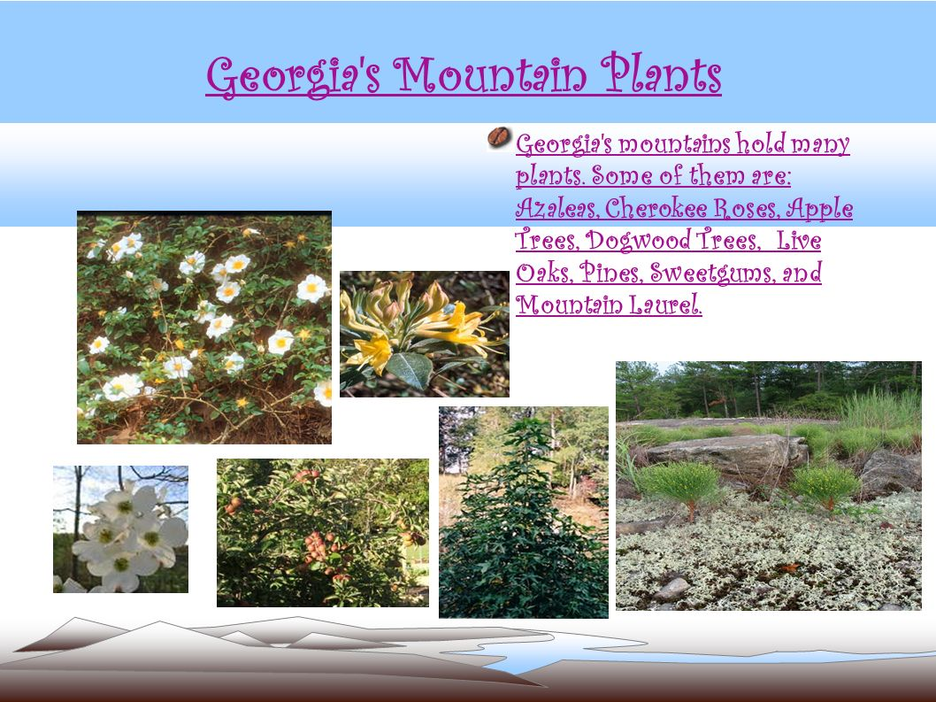 Georgia s Mountain Plants