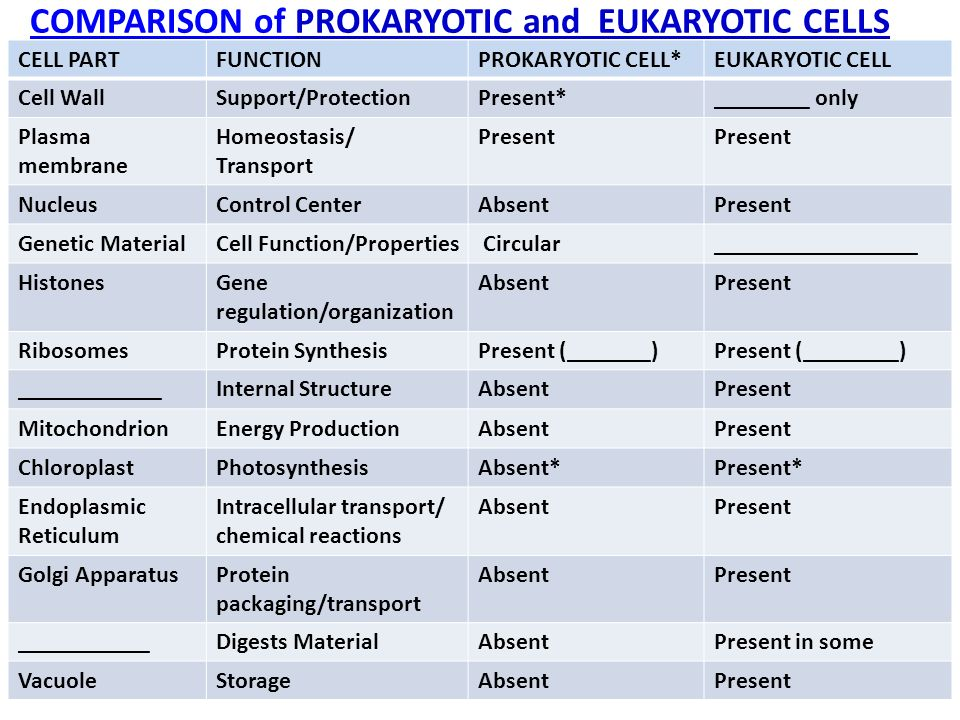 a comparison of the similarities and differences between the eukaryotic and prokaryotic cells Cell structure and differences under the microscope  prokaryotic and eukaryotic cells differ  the significant differences between prokaryotes and.