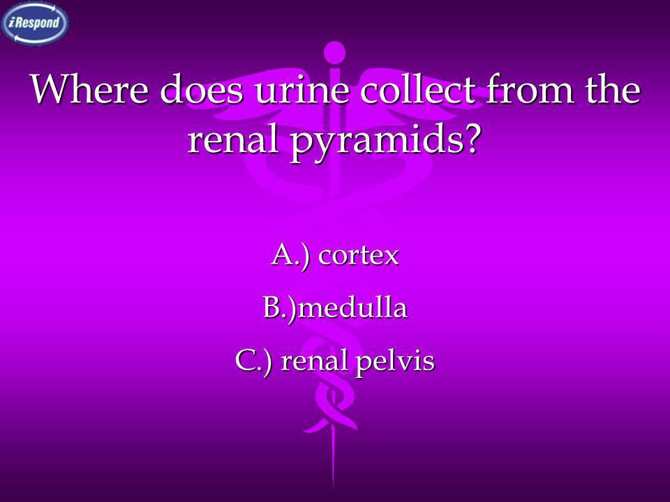 Where does urine collect from the renal pyramids
