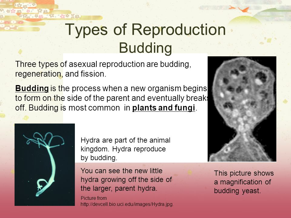 Types of Reproduction. - ppt download