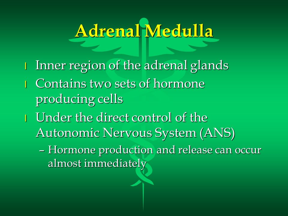 Adrenal Medulla Inner region of the adrenal glands