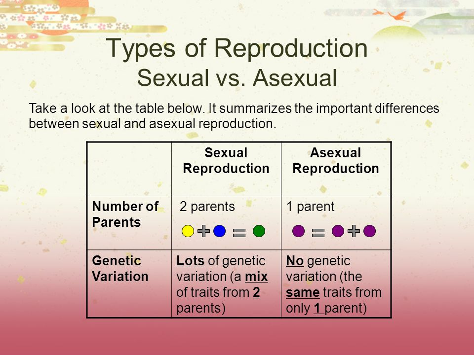 Types of Reproduction Sexual vs. Asexual