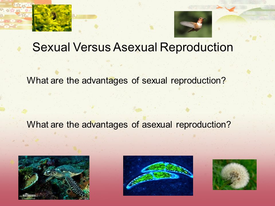 Sexual Versus Asexual Reproduction