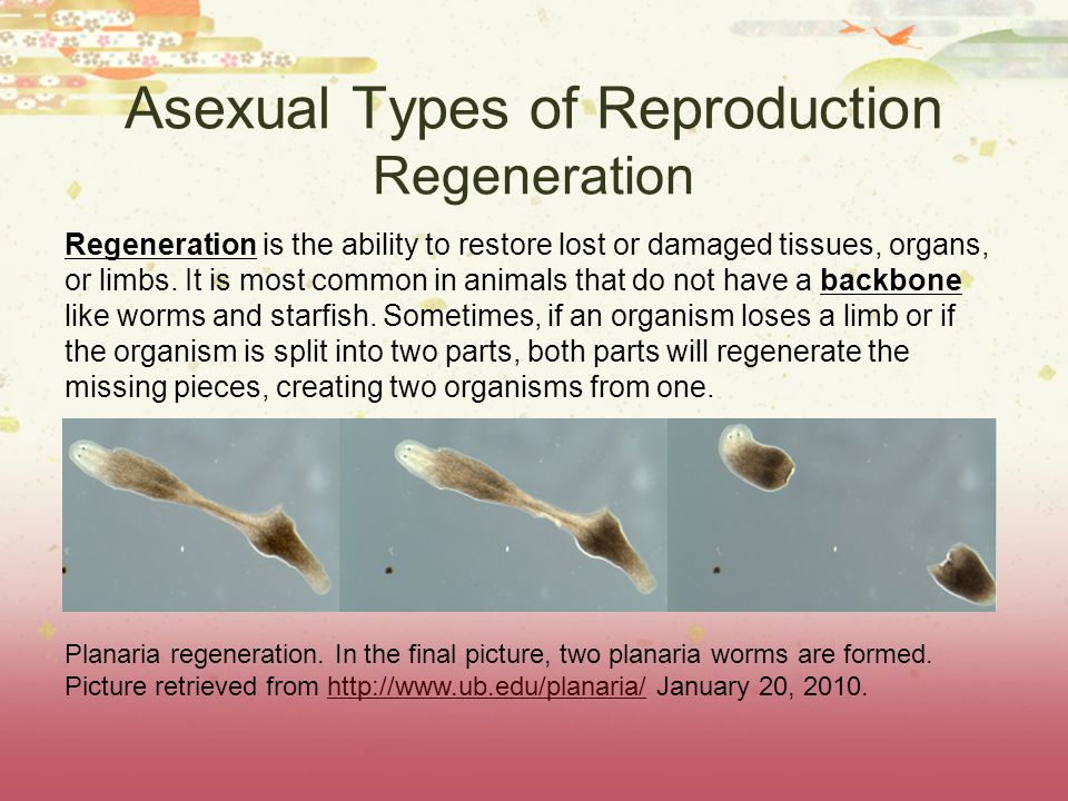 Asexual Types of Reproduction Regeneration