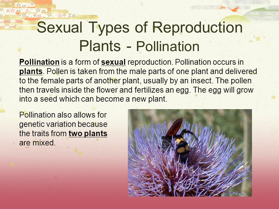 Sexual Types of Reproduction Plants - Pollination