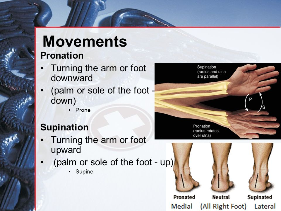 Movements Pronation Turning the arm or foot downward