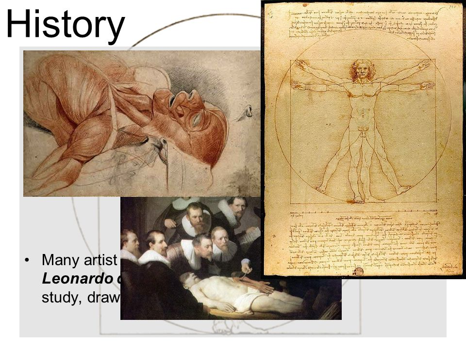 History During the Renaissance ( Rebirth ) the study of human life and medicine began to flourish.