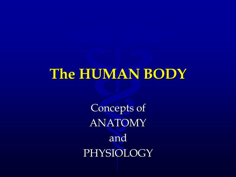 Concepts of ANATOMY and PHYSIOLOGY