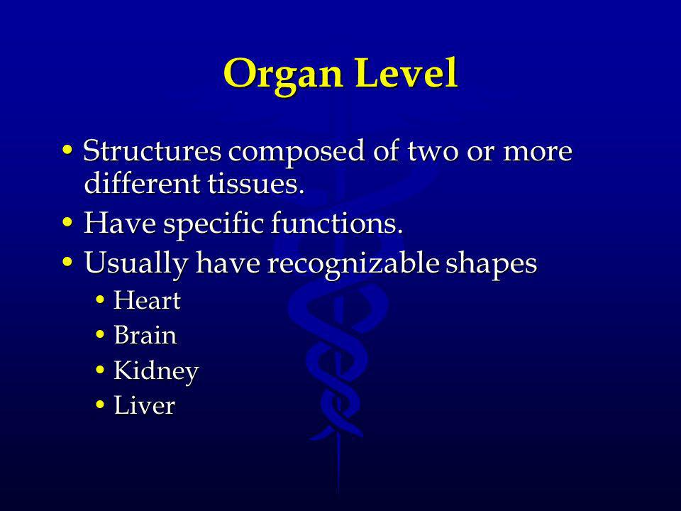 Organ Level Structures composed of two or more different tissues.