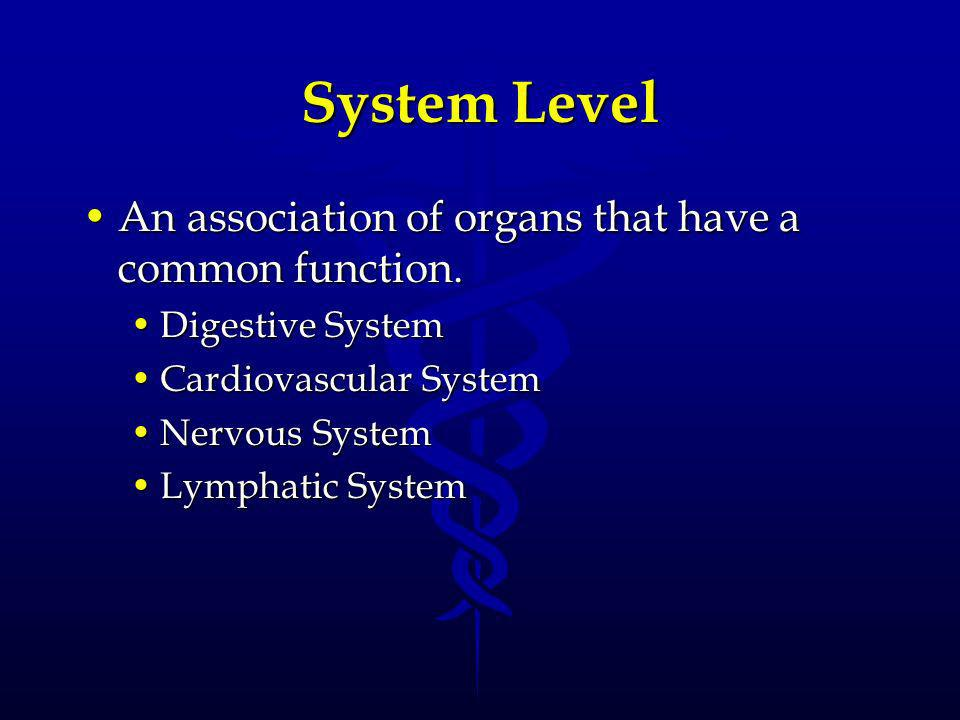 System Level An association of organs that have a common function.