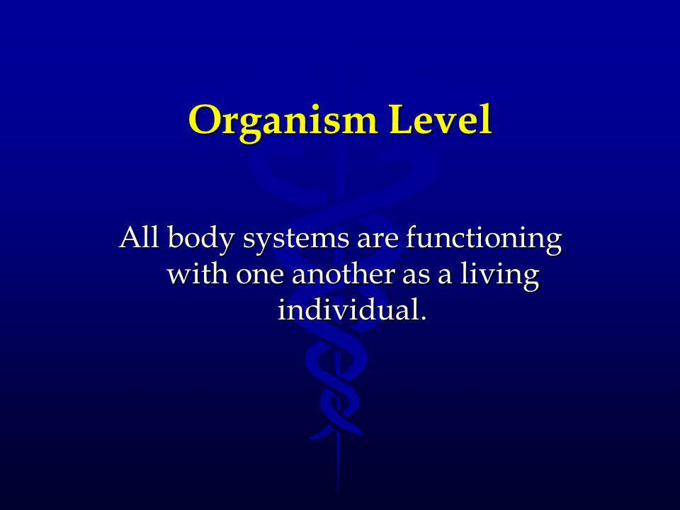 Organism Level All body systems are functioning with one another as a living individual.