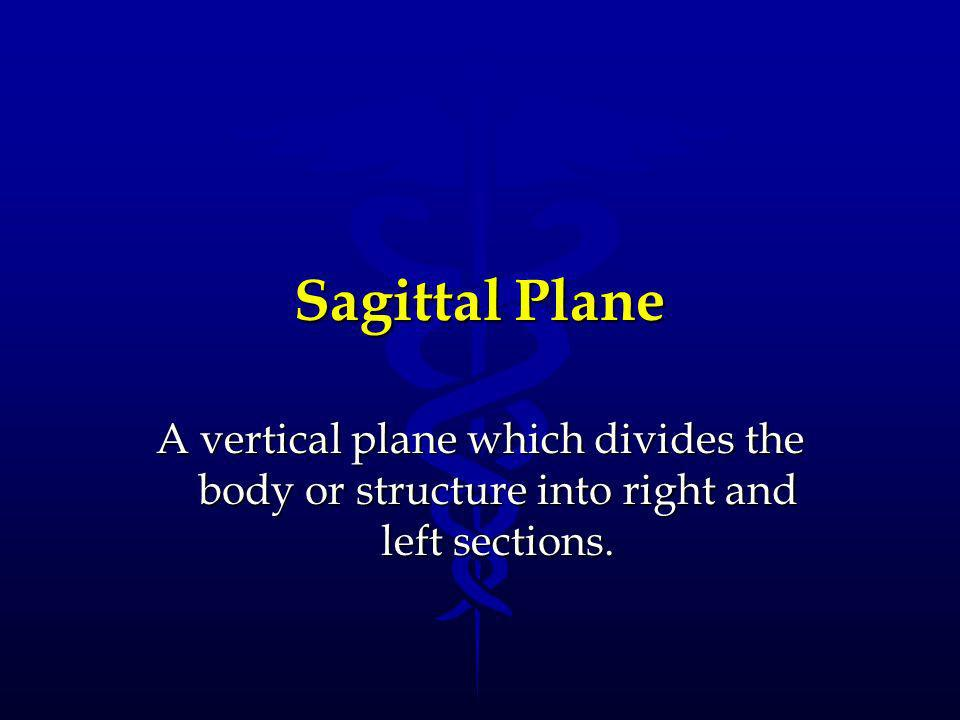 Sagittal Plane A vertical plane which divides the body or structure into right and left sections.