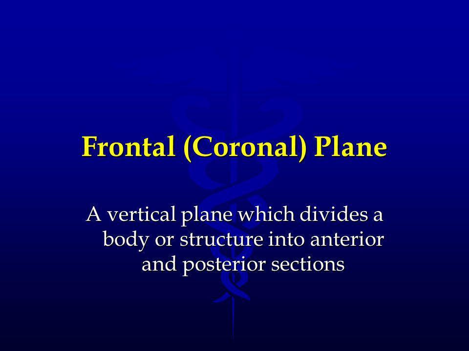 Frontal (Coronal) Plane