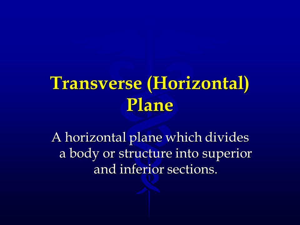 Transverse (Horizontal) Plane