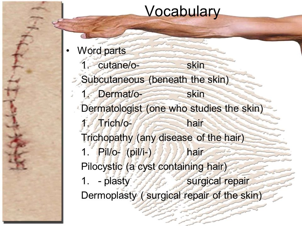 Vocabulary Word parts cutane/o- skin Subcutaneous (beneath the skin)
