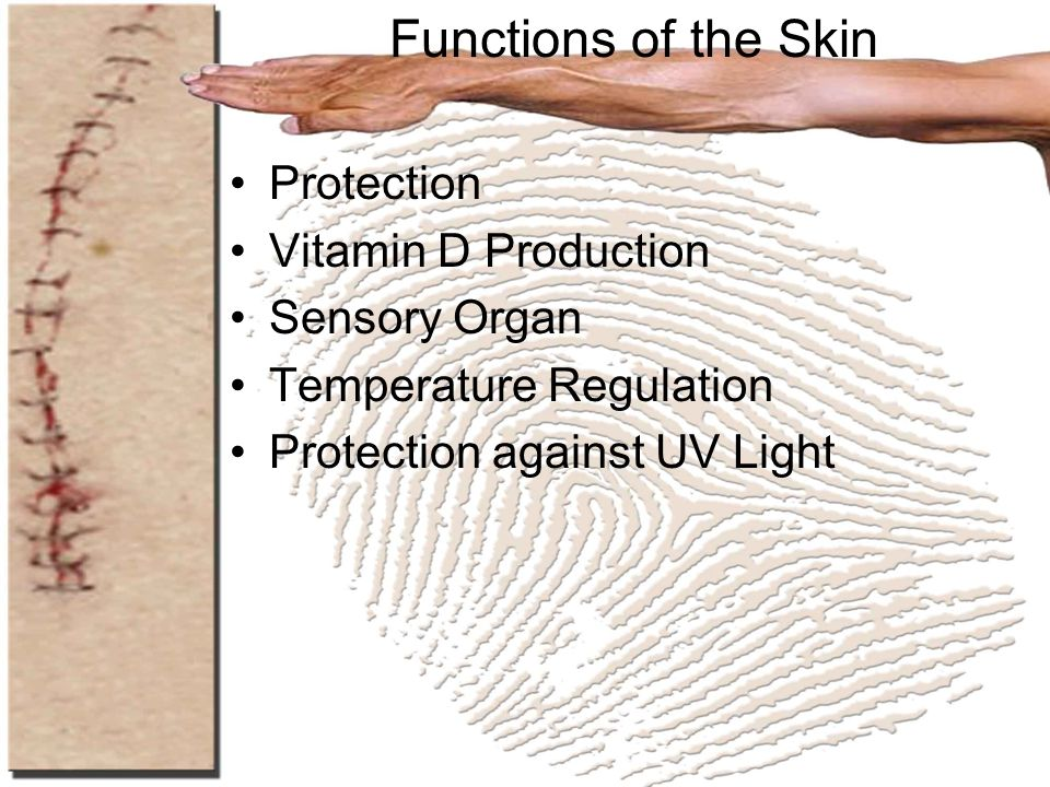 Functions of the Skin Protection Vitamin D Production Sensory Organ
